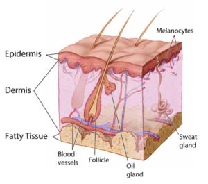 skin profile