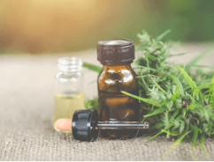 CBD Bottle and Plant